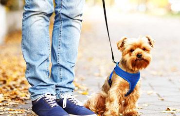 مقررات و ضوابط بهداشتی حیوانات همراه مسافر